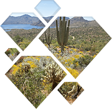 Phoenix Arizona desert landscape.